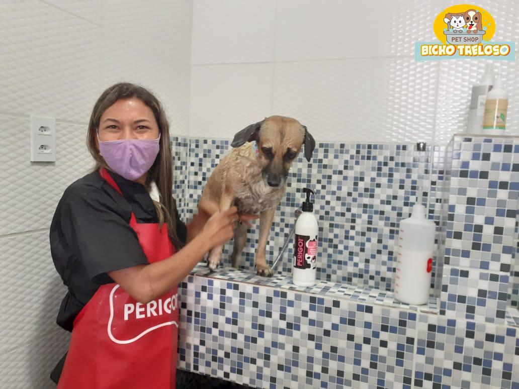 Cadela recebendo hidratação
