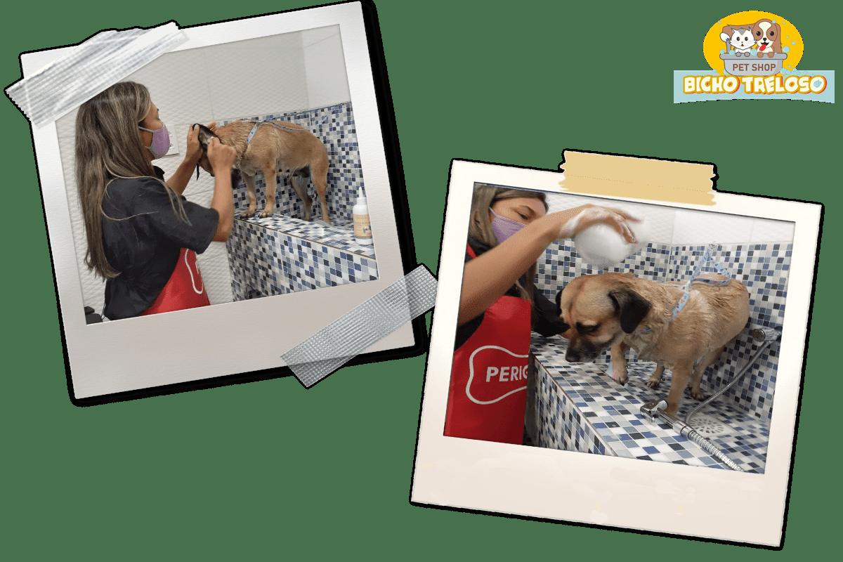 Banho no Pet Shop